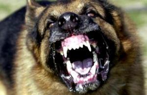 rabid-dogs