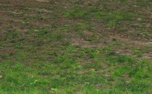Thin grass
