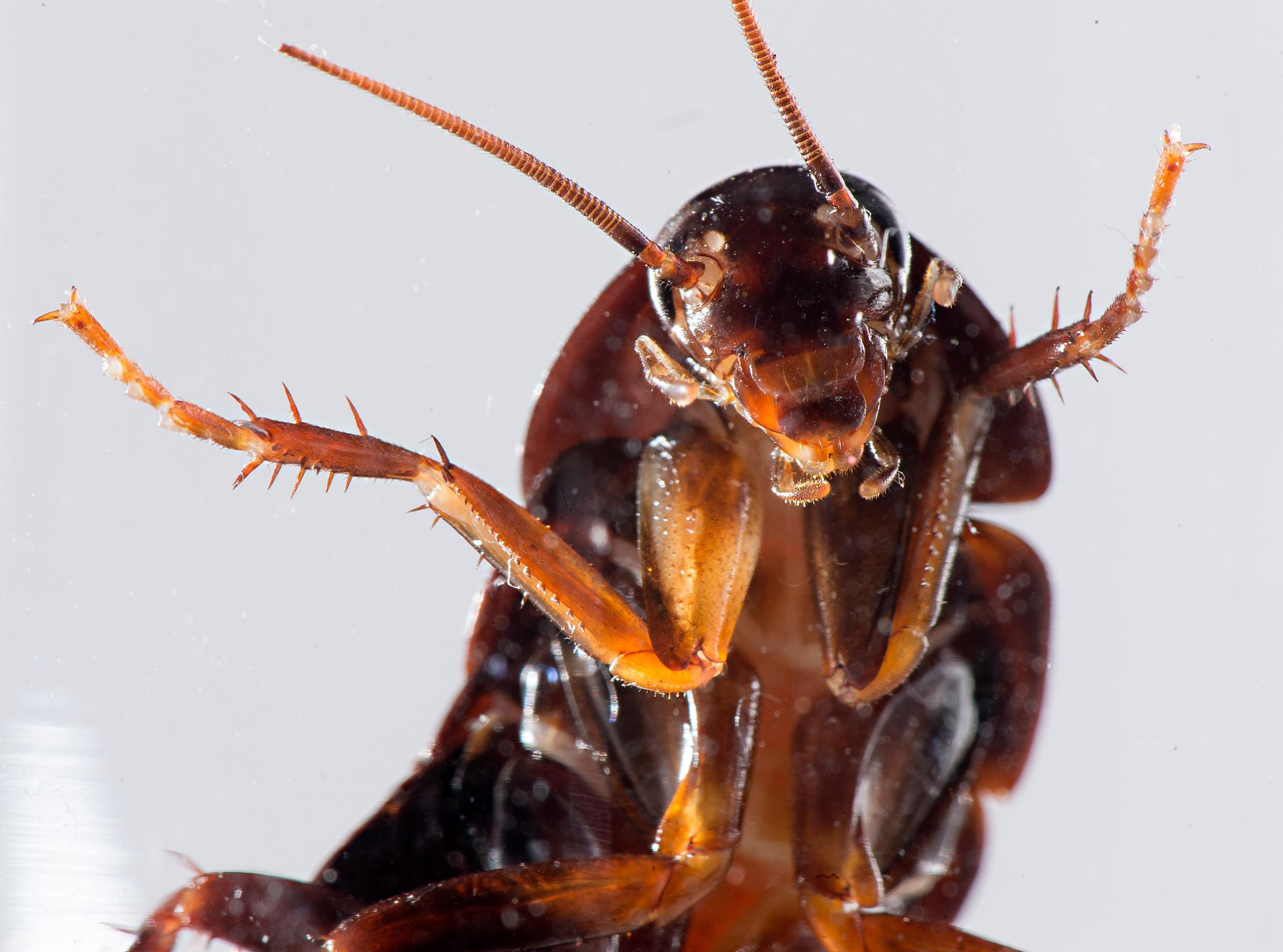 cockroach5